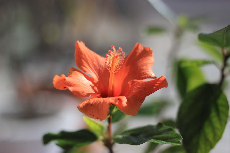 安心してください。咲いてます。page-visual 安心してください。咲いてます。ビジュアル