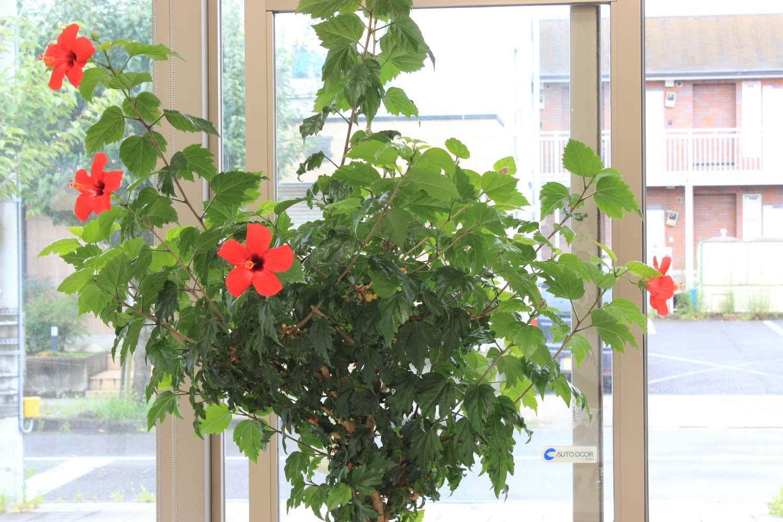 花盛りpage-visual 花盛りビジュアル