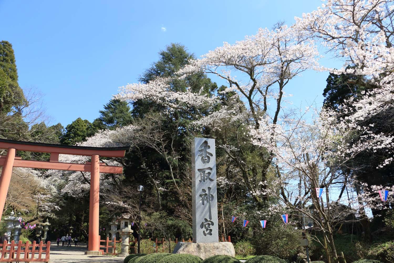香取神宮の桜page-visual 香取神宮の桜ビジュアル